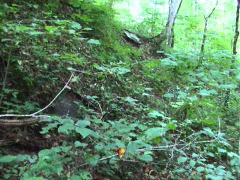 How to Find Ginseng First look for the right habitat