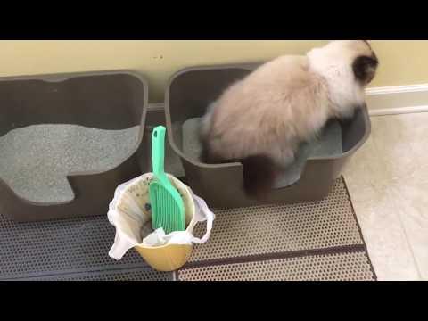 Ragdoll Cat's Litter Box Set Up - NVR Miss Litterboxes, Litter Lifter and WooPet! Cat Litter Mats