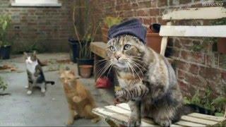 """Дискотека """"Дискомяу"""" (коты, кошки, танцы и """"Седая ночь"""")"""