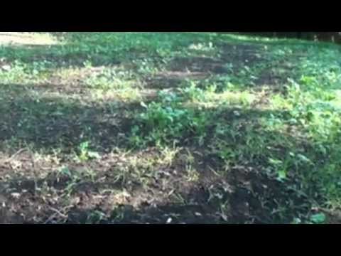 September 2012 Fall Food Plots with Don Mealey