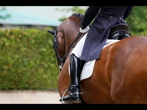 Dressage - Fight For This Love