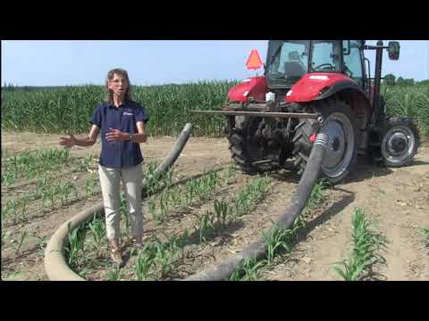 Corn School -  Manure In-crop