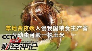 《央视财经评论》 20190707 虫害入侵 如何应战?| CCTV财经