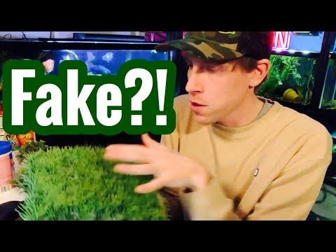 Aquarium Fake Plants - Realistic Grass, Silk, & Floating?
