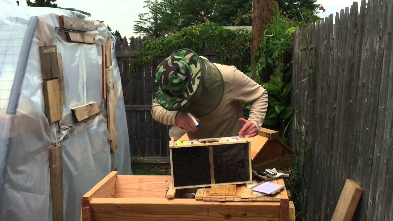 How To Set Up A Backyard Beehive