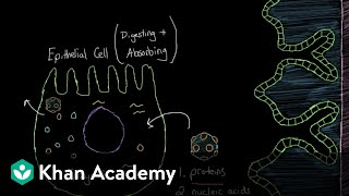 What is viral gastroenteritisGastrointestinal system diseasesNCLEX-RNKhan Academy