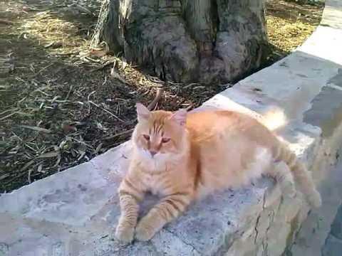Коты и кошки Кипр Harmony Bay Лимассол 2016