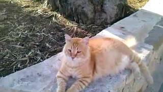 Коты и кошки Кипр Harmony Bay Лимассол 2016(, 2016-08-09T14:46:40.000Z)