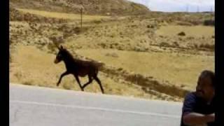 حمار وحصان.mp4