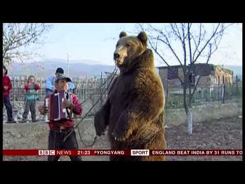 Brown (dancing) bear sanctuary (Bulgaria) - BBC News - 4th August 2018