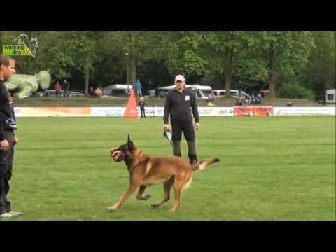 Kayser-Dog