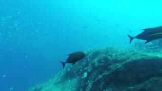 """Sub-Tropic Adventures"" St Helena Island, Diving to Barn Ledge 2015"