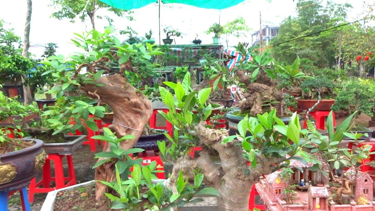 Tiểu cảnh rẻ tiền, bonsai quái đồng giá 200 nghìn – Price of beautiful small scene
