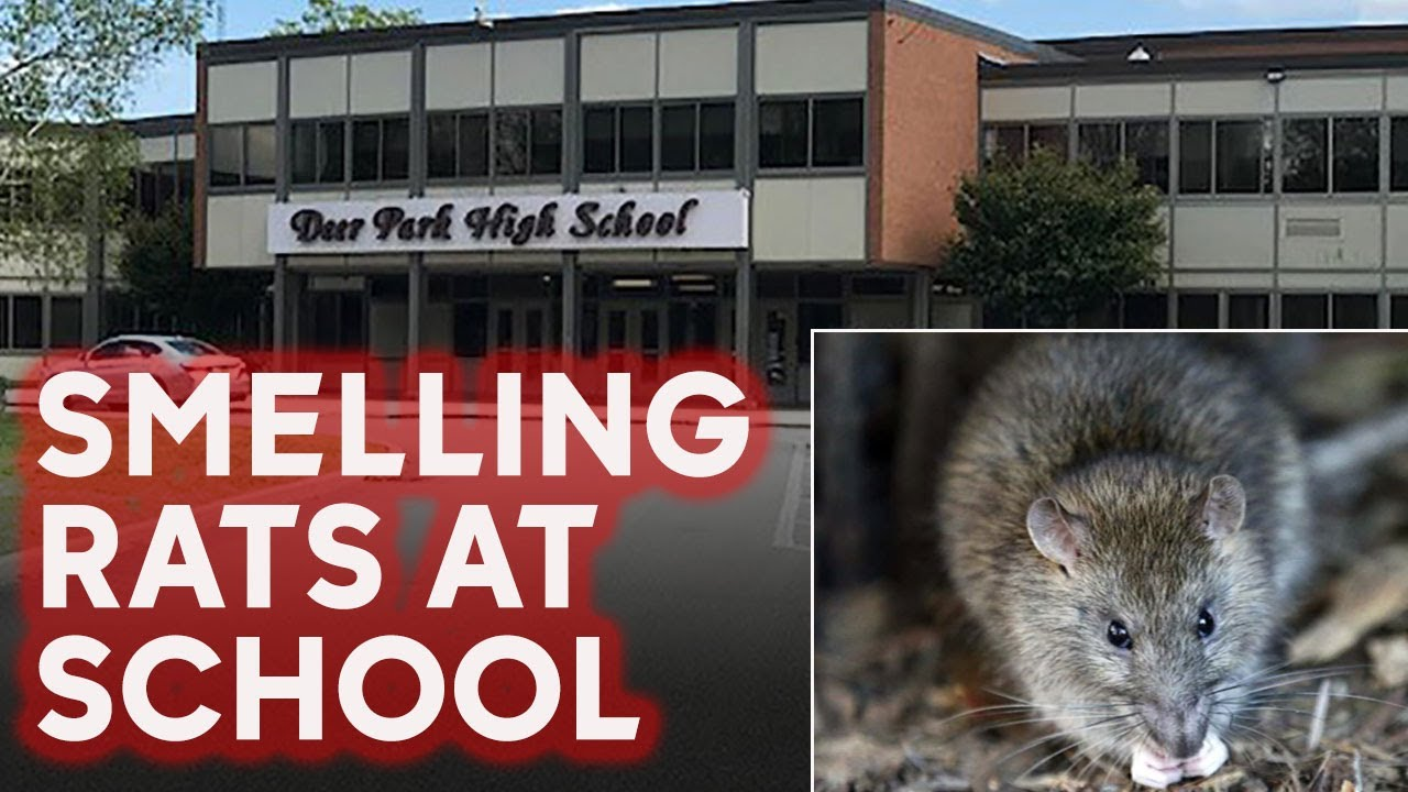 NEW YORK: WHITE SCHOOL OVERRUN OVERWHELM WITH DECOMPOSING RAT ODOR