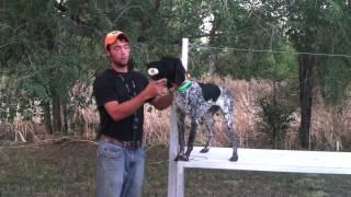 Teach Your Dog To Fetch - Trained Retrieve - Gun Dog Training