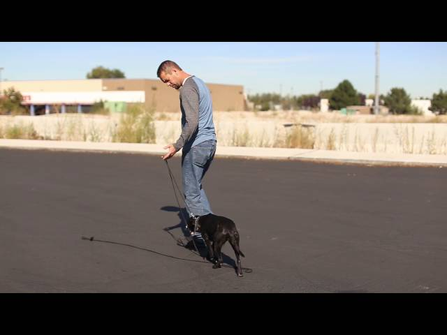 TYD60 Moment - Foundational E-Collar Work for Fixing Dog Reactivity- Utah Dog Trainers