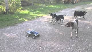 Dogs vs RC car