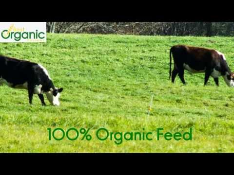 Organic Milk vs Regular Milk