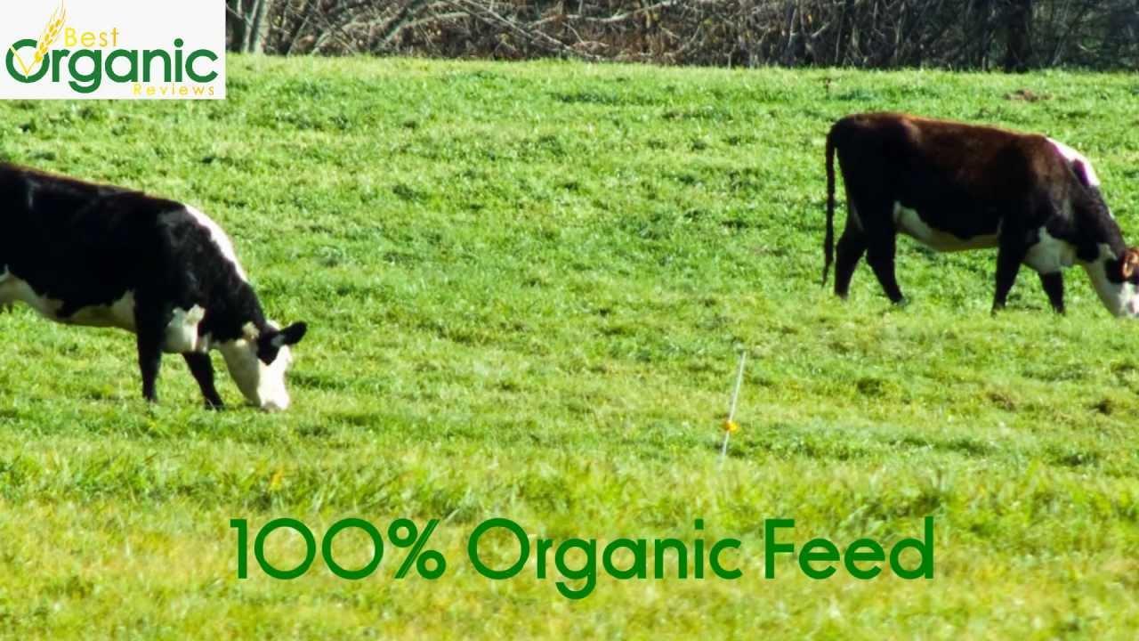 Organic Milk vs Regular Milk