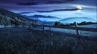 Grilli di notte : Suoni della natura rilassante per dormire