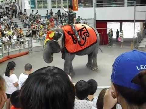 Elephant Performance - Hangzhou Zoo 2012