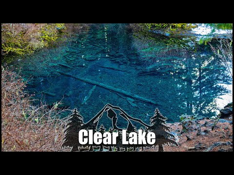 clear-lake:-the-underwater-forest,-oregon