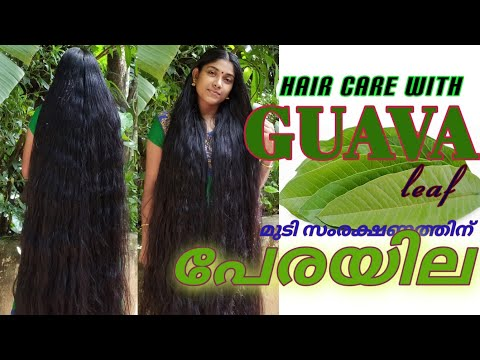 Guava leaf One of the excellent tip for  hair care & health care.it's very useful in rainy season..