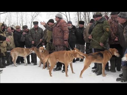 12-ая Орловская областная зимняя  выставка охотничьих собак 2017 г .