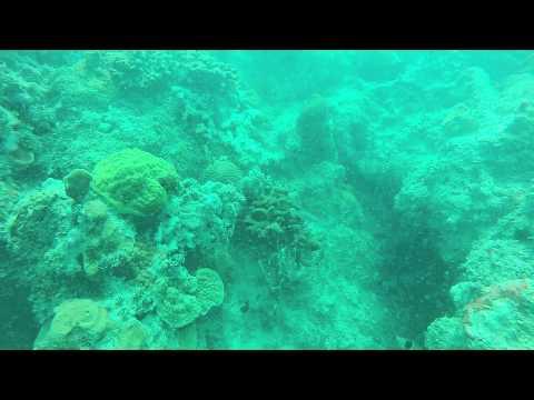 Whitehouse Jamaica - Dive 2