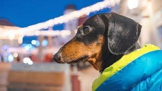 Чудный город Марибор На машине с собакой Такса Дин едет в авто Евротур ч 5