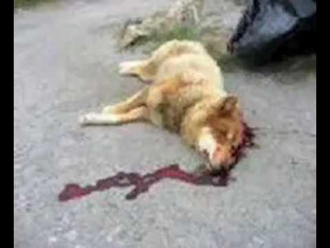 RSPCA Still Using Captive Bolt Guns to Slaughter Pet Dogs In UK