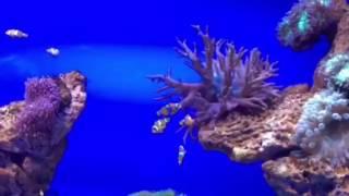 Palma Aquarium in Palma de Mallorca, Palma Kathedrale, Cala Millor, Balearen