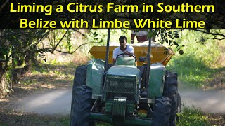 Liming a Citrus Farm in Southern Belize with Limbe White Lime