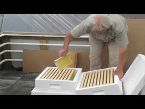 Beekeeping for beginners Iceland