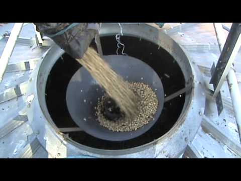 Loading Spring Beans into a grain silo
