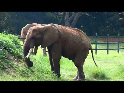 Elephants Life @ Mysore Zoo / Слоны @ Зоопарк в городе Майсур Индия