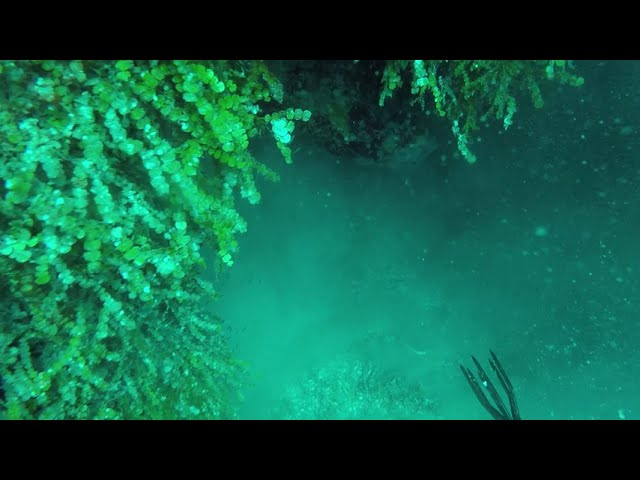 Lionfish Spearing in Jamaica 2017 with Eagle Ray & Dolphins swimming by