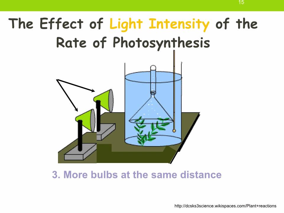 an experiment testing the wavelength and intensity of light on the rate of photosynthesis 2), in the presence of light of appropriate intensity, the plant will photosynthesise and produce bubbles of oxygen-containing gas these bubbles can be counted and the rate of bubbling can serve as an indication of the rate of photosynthesis when the light intensity is increased, the rate of bubble production should increase.