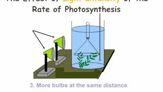 IGCSE 2.10. Rate limiting factors in photosynthesis.  Ms Cooper