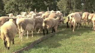 La ferme de Belfort, plus qu'un métier une passion pour Sandrine