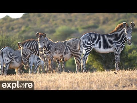 African Wildlife Safari Camera powered by EXPLORE.org