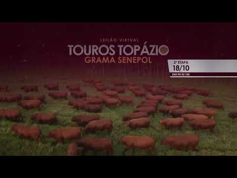 Leilão Virtual Touros Topázio - Etapa Final