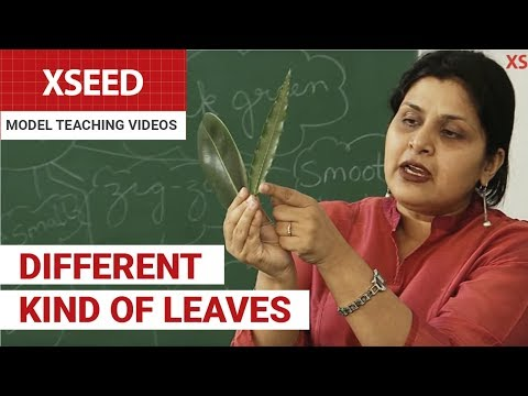 Different Type of Leaves | XSEED Model Teaching Videos