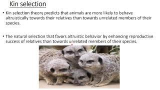 BEHAVIORAL ECOLOGY   ALTRUISM   HAMILTON'S RULE   KIN SELECTION
