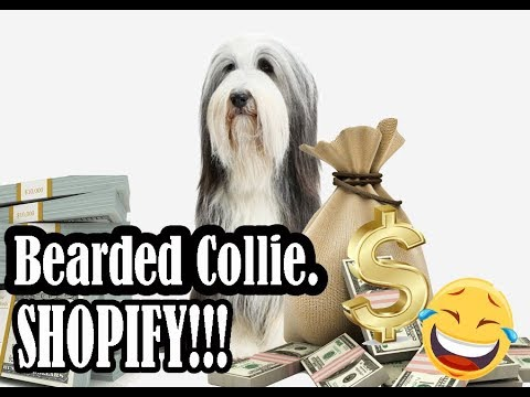 Bearded Collie dog - Shopify dropshipping niche analysis for print on demand business