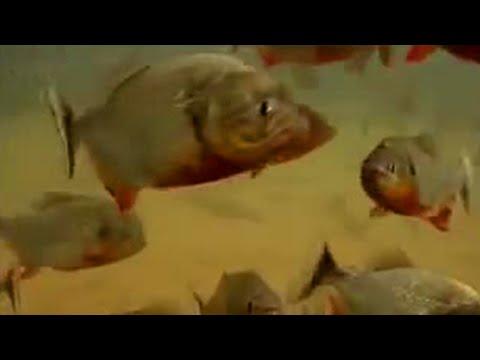 BBC: Jungle: Piranha Fish Feeding Frenzy!