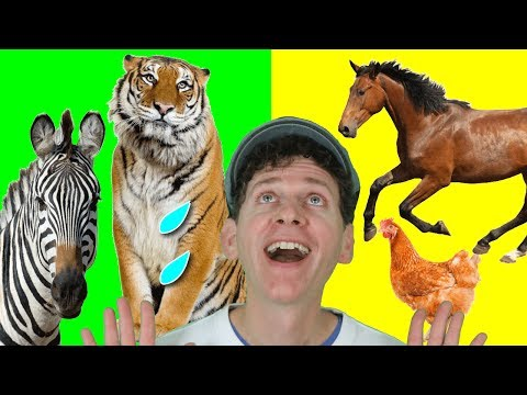 Evention Tv Presents: How horses eat their food from YouTube · Duration:  2 minutes 8 seconds