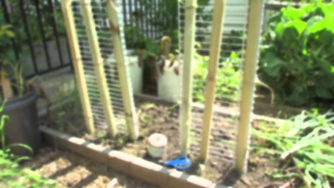 Vegetable Trellis Ideas Part - 39: How To Make A 6 Foot Cucumber U0026 Vegetable Trellis In 15 Minutes: Grow  Vertical! - TRG 2014 - YouTube