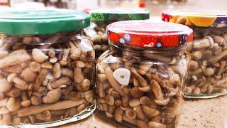 Солёные опята . Простой рецепт засолки грибов на зиму . #мировойзакусон