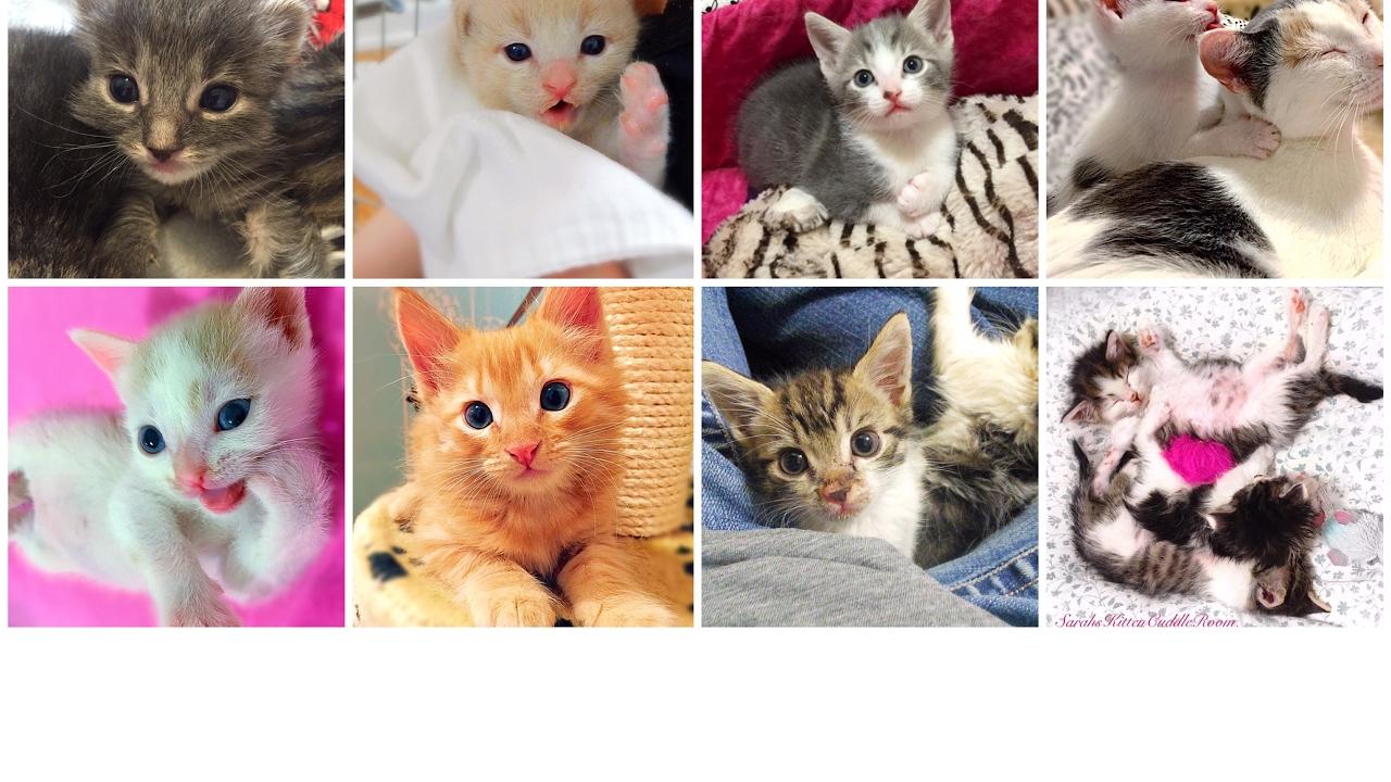 360 Kitten Cuddle Room LIVE Foster Kitten Cam